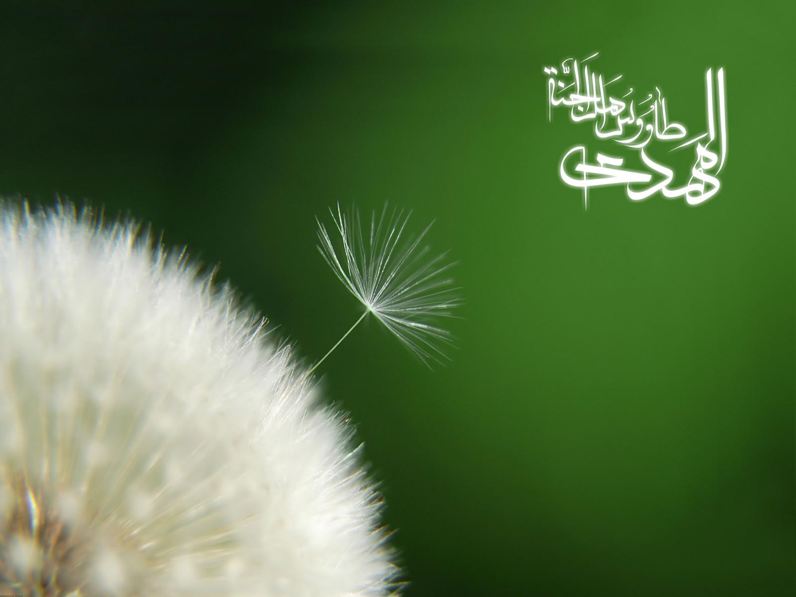 http://dl.aviny.com/Album/mazhabi/ahlbeit/mahdi/kamel/206.jpg